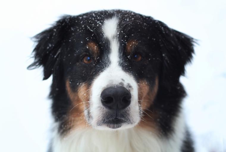 caleb-snow
