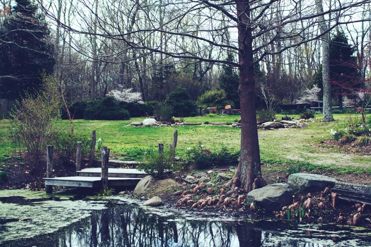 peconic river herb farm 4.23.17 14