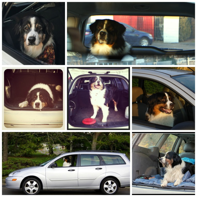 caleb in the car collage.jpg
