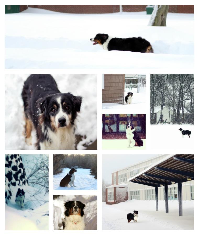 caleb snow collage