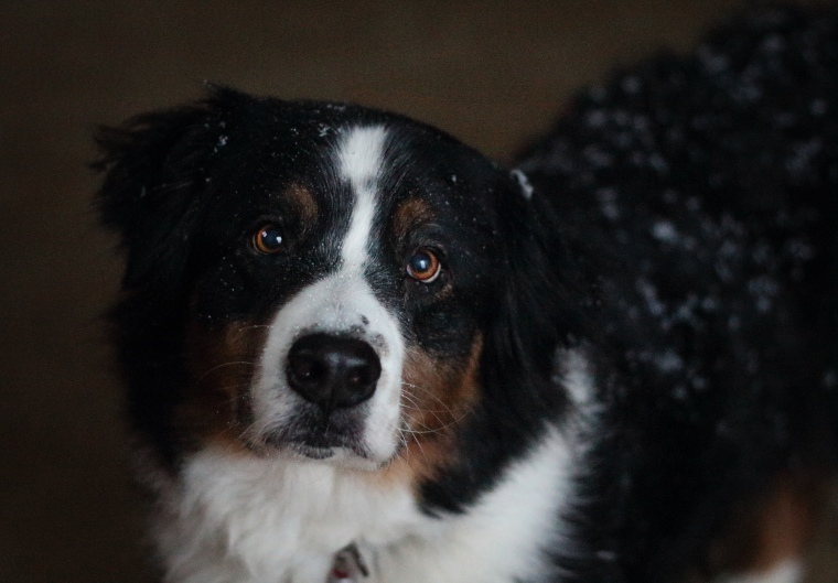 snow dog 2.8.13