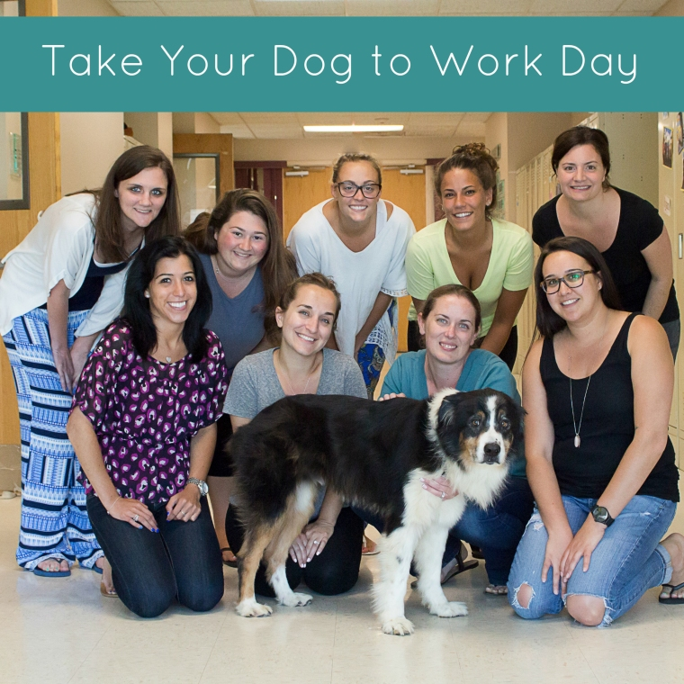 take your dog to work day 6.26.15